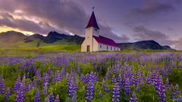 Wallpaper: church in the field of lupines HD wallpapers 824