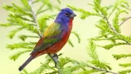 Beautiful Colored Bird HD Desktop Backgrounds, Photos, Wallpapers 884