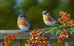 HD Beautiful Pair Of Colorful Birds Wallpaper 1450