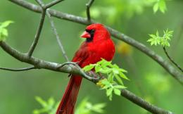 Birds Desktop HD Wallpapers birds images Birds wallpapers 1588