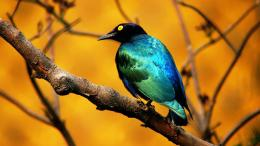 Colorful Little Bird HD Wallpaper 859