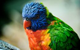 Colorful HD Parrot Bird High Resolution Images 1776