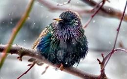 Colorful Bird In The Rain 212
