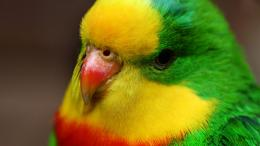 colorful hd birds wallpapers,birds,cute birds hd wallpapers,full 446