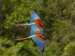 File Name : birds colorful parrots flying free 223348 jpg Resolution 1534