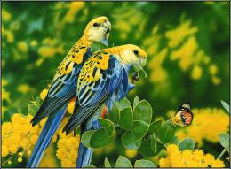 birds latest hd wallpapers beautiful birds latest hd wallpapers 1732