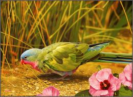 birds latest hd wallpapers beautiful birds latest hd wallpapers 1325