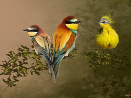 Colorful Birds Pictures 566