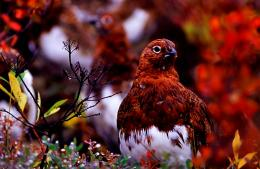 HD Lovely & Colorful Bird Wallpaper 1376