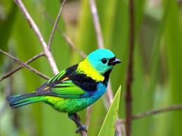 Colorful Birds Wallpapers 1853