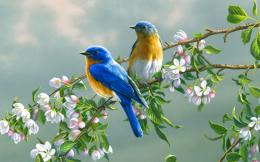 Cute Birds Beautiful Colorful New Latest HD Wallpaper 795