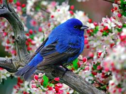 Colorful Little Bird HD Wallpaper 176