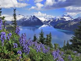 columbia lakes purple flowers lake garibaldi park 1600x1200 wallpaper