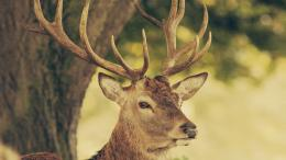 with wildlife deer wallpapers hd big buck wallpaper 5760x4209 0 kb