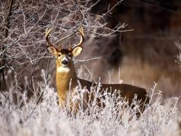 deer hd wallpapers deer hd wallpapers deer hd wallpapers deer hd