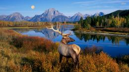 Tagged with: Animal Deer HD Wallpapers Deer Wallpapers
