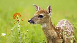 for deer hd deer wallpapers full hd wallpaper animal hd wallpaper deer