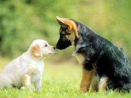 dogs care and affection amongst dogs love contrast cute dogs dogs in
