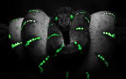 exotic snake wallpaper prince exotic snake widescreen wallpaper 1471