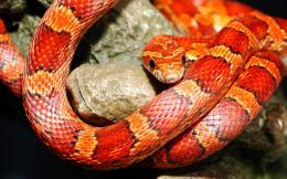 Exotic Snake Wallpapers 1624