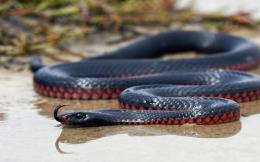 awesome exotic snake high definition wallpaper download exotic snake 464