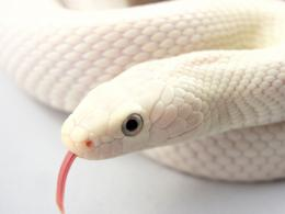 Exotic Snake Wallpapers 1483
