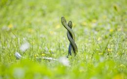 Exotic Snake Photos HD wallpapesExotic Snake Photos 766