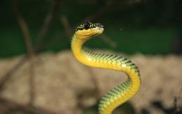 Exotic Snake Wallpapers 1088