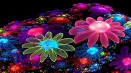 Description of Cool Colorful Flowers Desktop Wallpaper Free Desktop