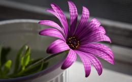 cool flower hd wallpaper abstract picture purple hd wallpaper jpg