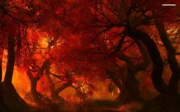 Fire colors in the forest Wallpaper