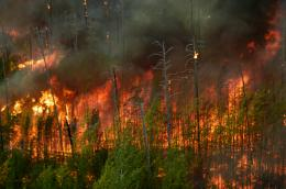 images of forest fires images of forest fires was posted in september