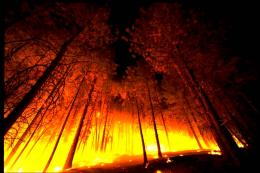 forest fire 766