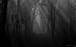 spooky forest wallpaper 22750 hd wallpapers background jpg