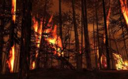 Free Wallpapers Backgroundsforest burning trees flames fire