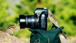 Chipmunks Funny HD Wallpapers