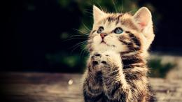 funny cat, full hd wallpaper, praying kitten, cute animal picture
