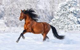 Horses HD Wallpapers