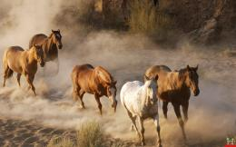 Beautiful Wild Horses HD Wallpaper