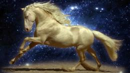 Horses Wallpaper 3DHD Wallpapers