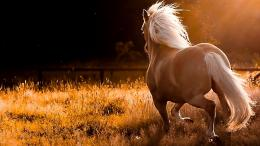 horse hd wallpapers running horse hd wallpapers running horse hd