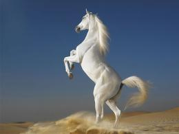 white horse wallpapers white horse hd wallpapers white horse hd
