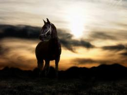 awesome arbian horse hd wallpapers top background horse images