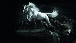 Horse Wolf Wallpapers HD wallpapersWhite Horse Wolf Wallpapers