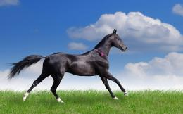 Beautiful Black Horse hd Wallpaper