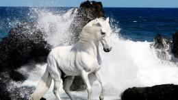 White Horse and Waves Seeside HD Wallpaper
