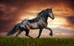 Dark Arabian Horse HD Wallpaper