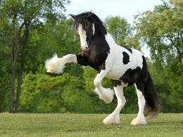 Racer Horse HD Wallpapers