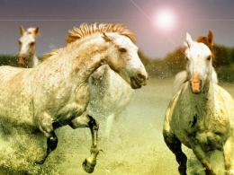 horse hd Wallpaper and make this wallpaper for your desktop, tablet