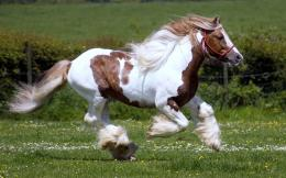 hd horse wallpaper with a fast running white brown horse hd horses